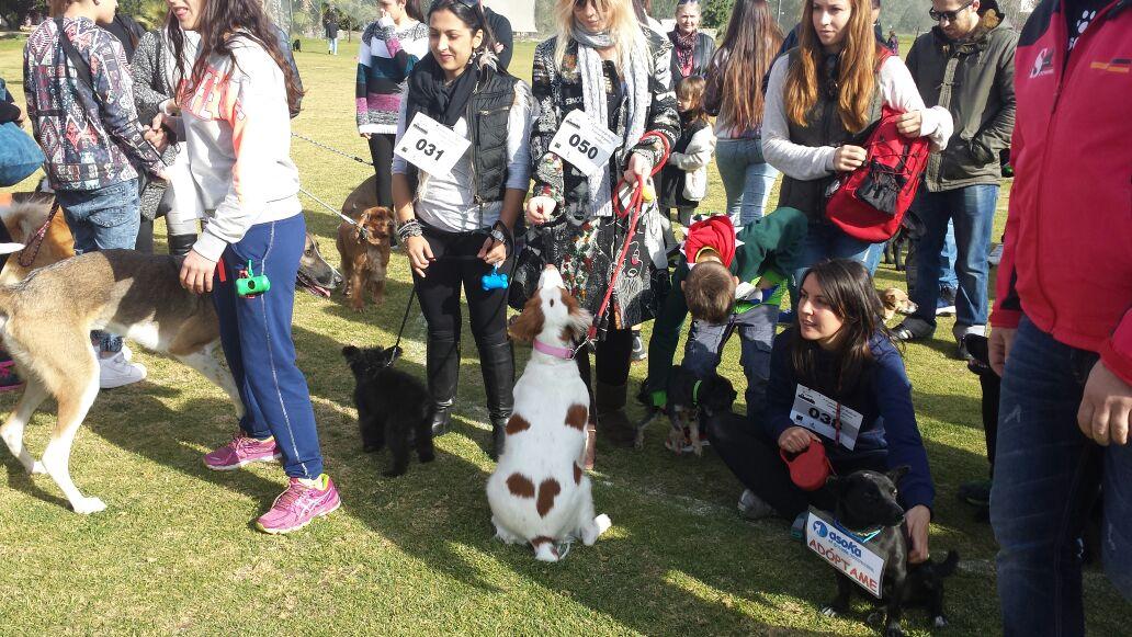 L'Alfàs acoge la próxima semana su tercer Festival Canino y de la Adopción