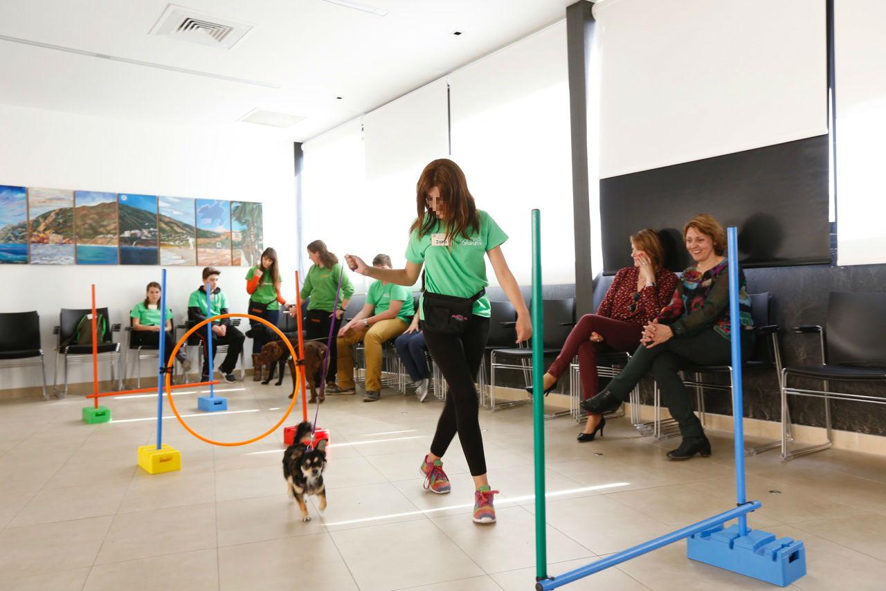 El Ayuntamiento de l'Alfàs lanza un programa de terapia con perros para mejorar el rendimiento escolar