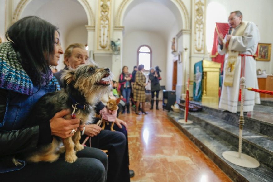 L'Alfàs del Pi celebrará este domingo San Antón con la tradicional bendición de animales