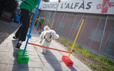 Perros que ayudan a mejorar el rendimiento académico