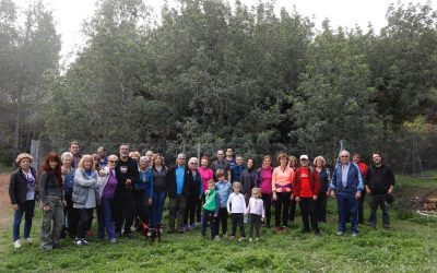 Medio Ambiente promueve el conocimiento del algarrobo de Foia Brell entre la sociedad alfasina