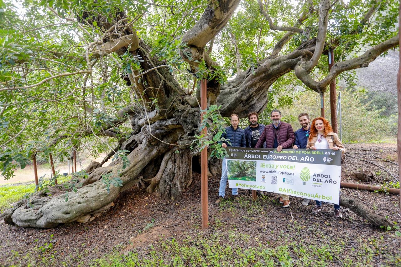 L'Alfàs pide a la ciudadanía que vote al algarrobo de Foia Brell como Árbol del Año en España