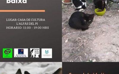L'Alfàs del Pi acoge unas jornadas sobre la gestión de colonias felinas