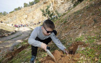 Centenares de personas participan en el Día del Árbol de l'Alfàs del Pi