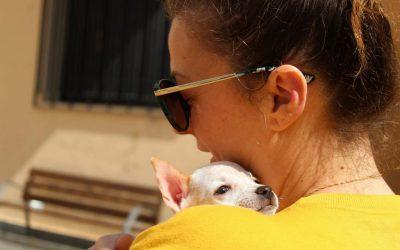 L'Alfàs acoge este domingo un festival para favorecer la adopción de animales sin hogar