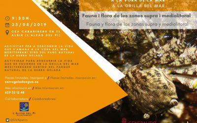 Actividad para descubrir la vida que se esconde en la orilla del mar en el Parc Natural de la Serra Gelada