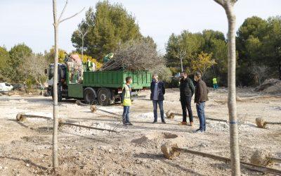 El Ayuntamiento de l'Alfàs reforesta un solar municipal con la plantación de 183 árboles autóctonos