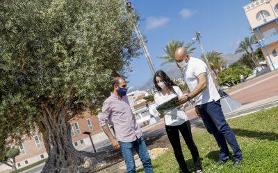 L'Alfàs organiza para el 5 de junio una Ruta Jove al Molí de Mànec y a los árboles singulares
