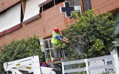 El Ayuntamiento de l'Alfàs desarrolla la campaña de poda de más de 300 ficus