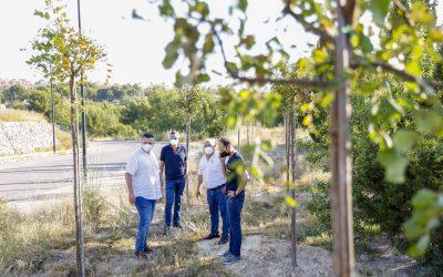 Prosigue el Plan de Reforestación de l'Alfàs con la plantación de un centenar de árboles adultos